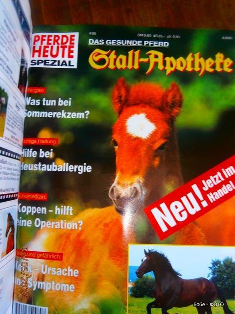 pferde-2.jpg