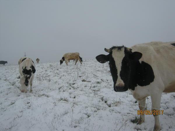 sneg014.jpg