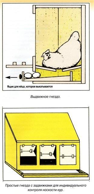 gnezdo6.jpg