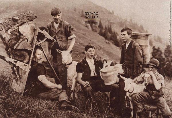 604-farmers-resting-saanen-goat.jpg