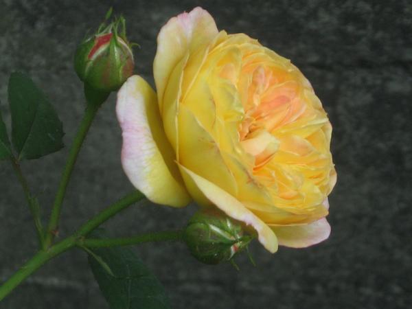 rozzhelt.jpg