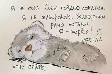sova.jpg