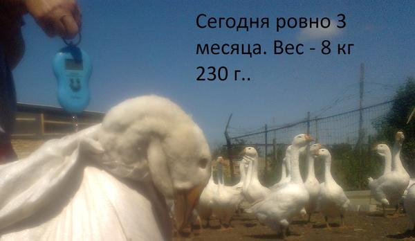 foto2647.jpg