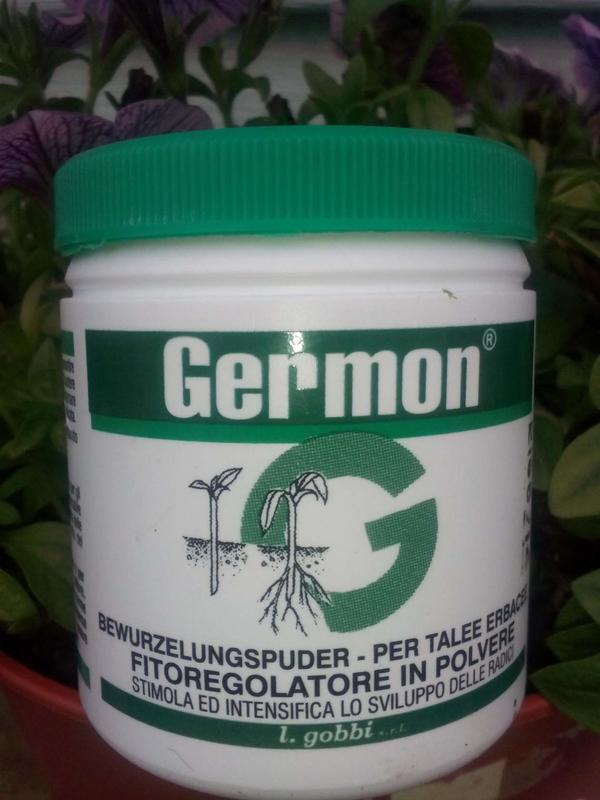 germon.jpg