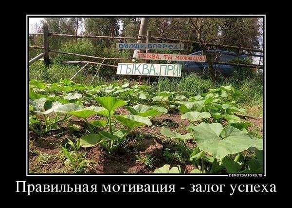motivaciyaovoshchey.jpg