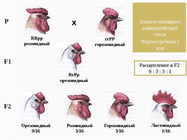 genetikagrebneypetuhov.jpg