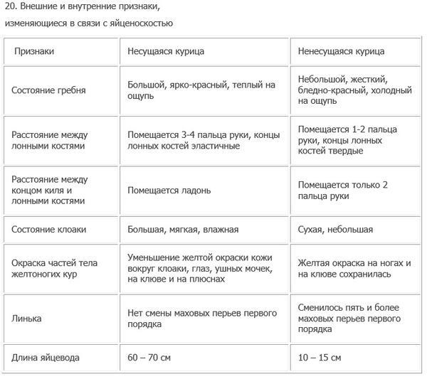 ocenkanesushki-priznakihorosheyyaycenoskosti.jpg
