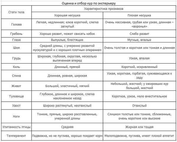 ocenkanesushki-priznakihorosheyyaycenoskosti2.jpg