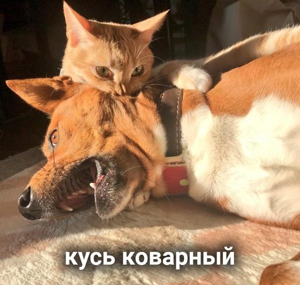 file614439.jpg