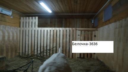 dsc02555.jpg