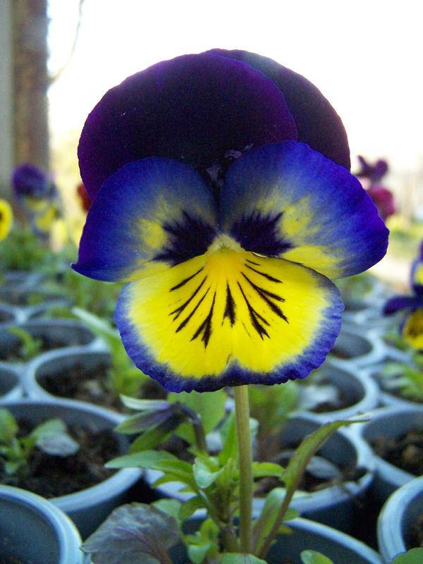 cvety104.jpg