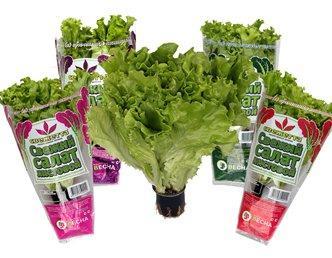 salat-v-gorshochkah.jpg