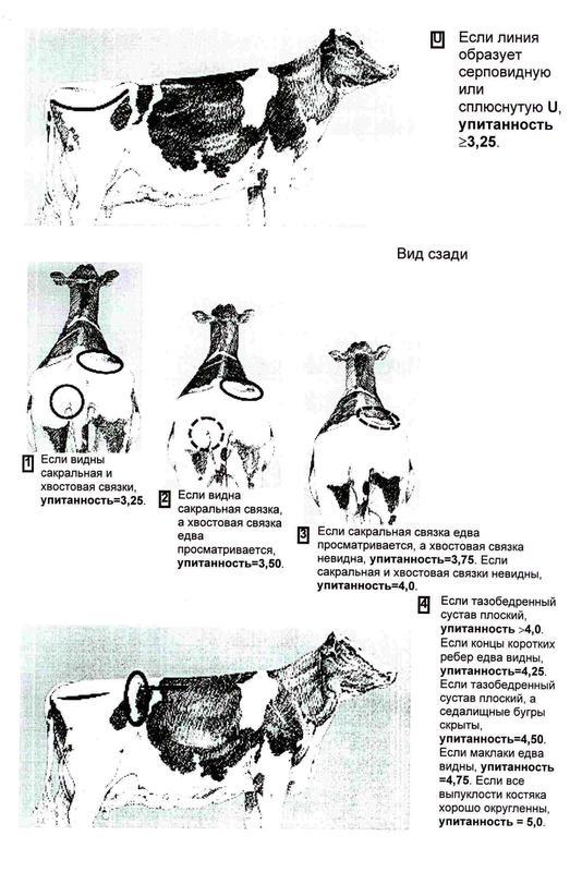 ocenka20upitannosti20t21.jpg