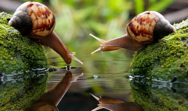 picturesnails1258p0.jpg