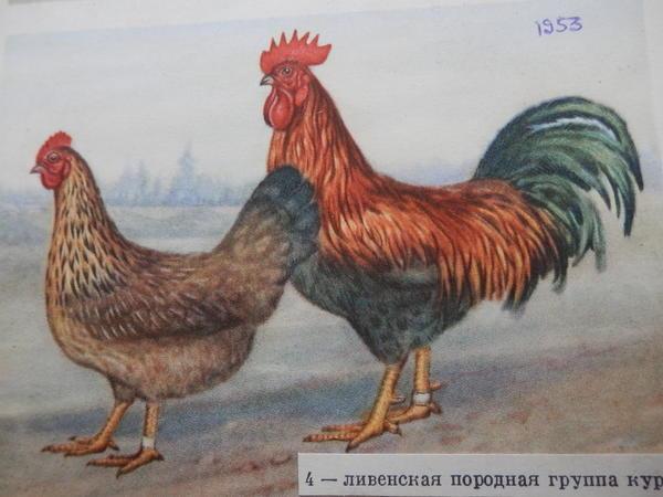 p4210013.jpg