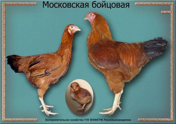 moskovskayaboycovaya.jpg