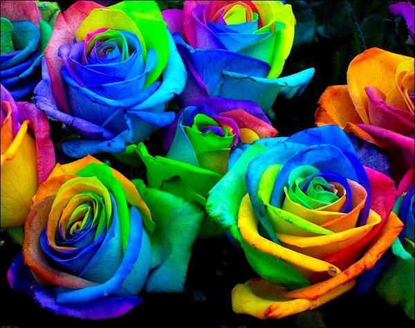 100-sht-paket-krasivyy-cvetok-raduga-vyrosli-semyan-semyan-rozy.jpg