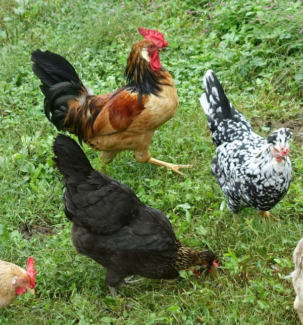 flock9thor.jpg