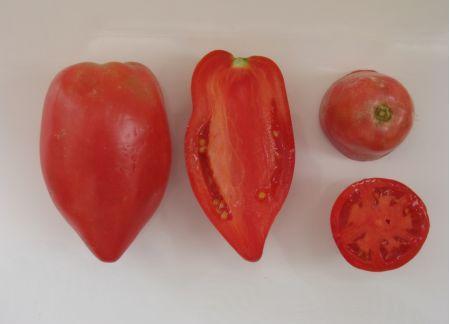 tomat-safaija-2-450x324.jpg