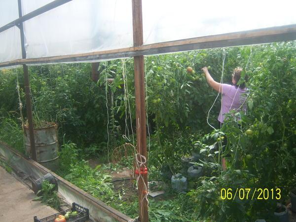 tomatvmeshkah.jpg