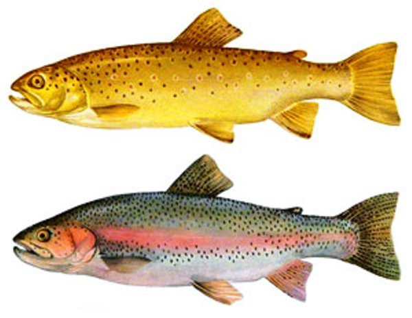 forel2.png