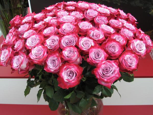 roses09.jpg
