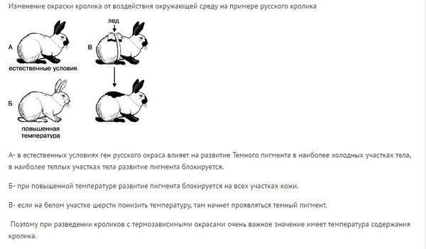 tirozin.jpg