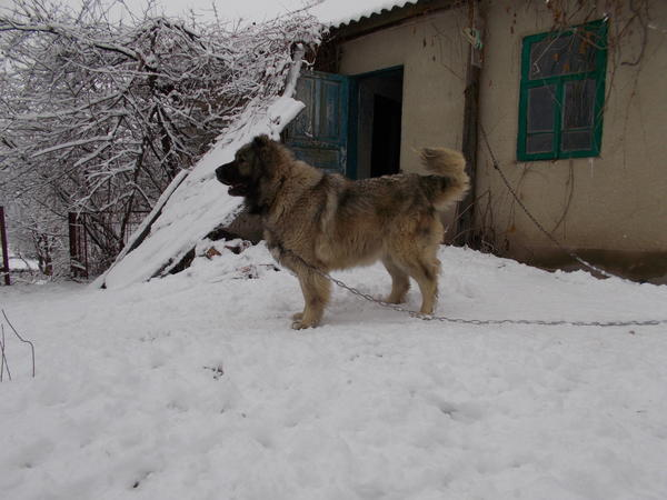 sneg028.jpg