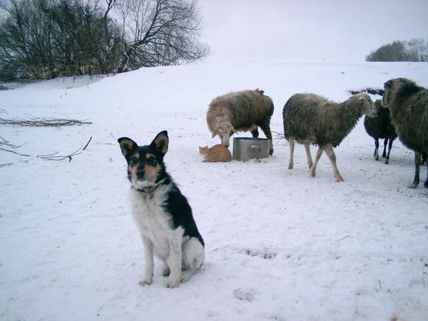 ovcy016.jpg