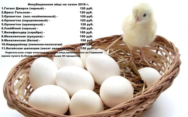 chick-eggs-basket-670344.jpg