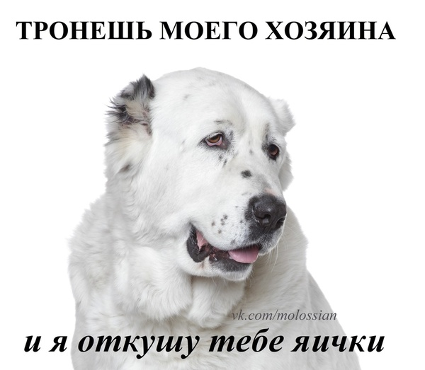 Аватар пользователя Андрей Закатаев