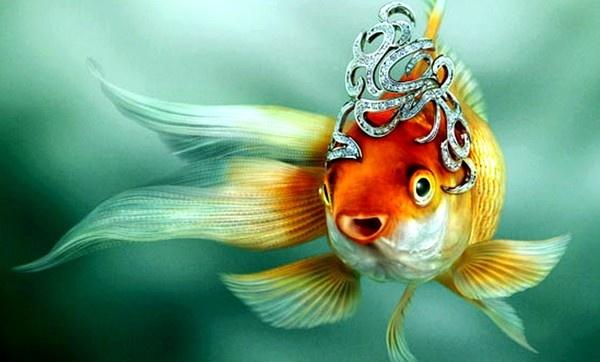 Аватар пользователя Золотая рыба