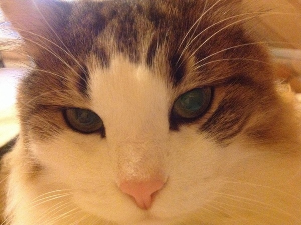Аватар пользователя Shinshila_cat