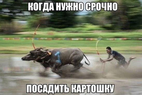 Аватар пользователя arkadii