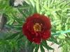 Аватар пользователя Светлана калужанка