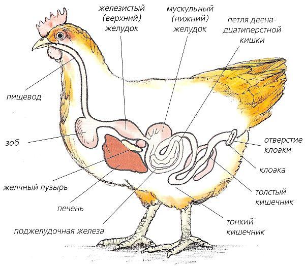 fermer.ru/files/u23/
