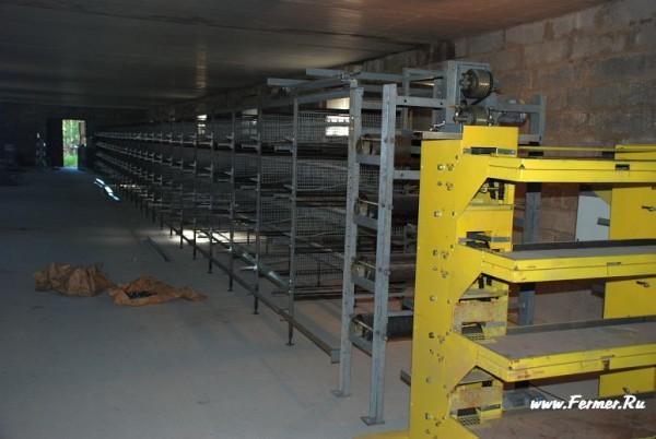 действия термобелья оборудование для перепелиной фермы цена простом нательном
