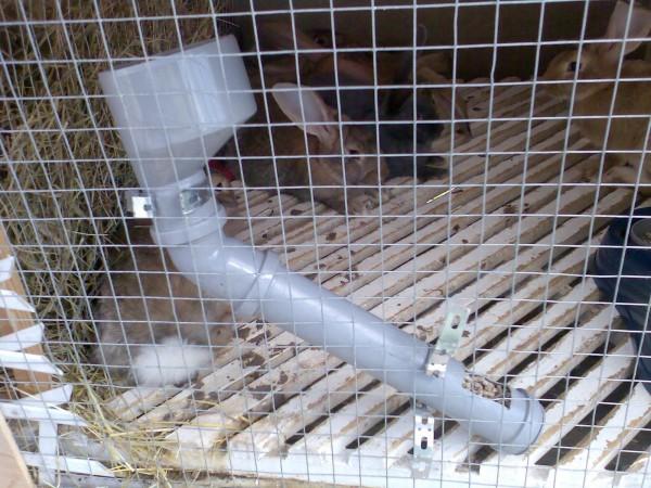 Фото кормушки для кроликов своими руками