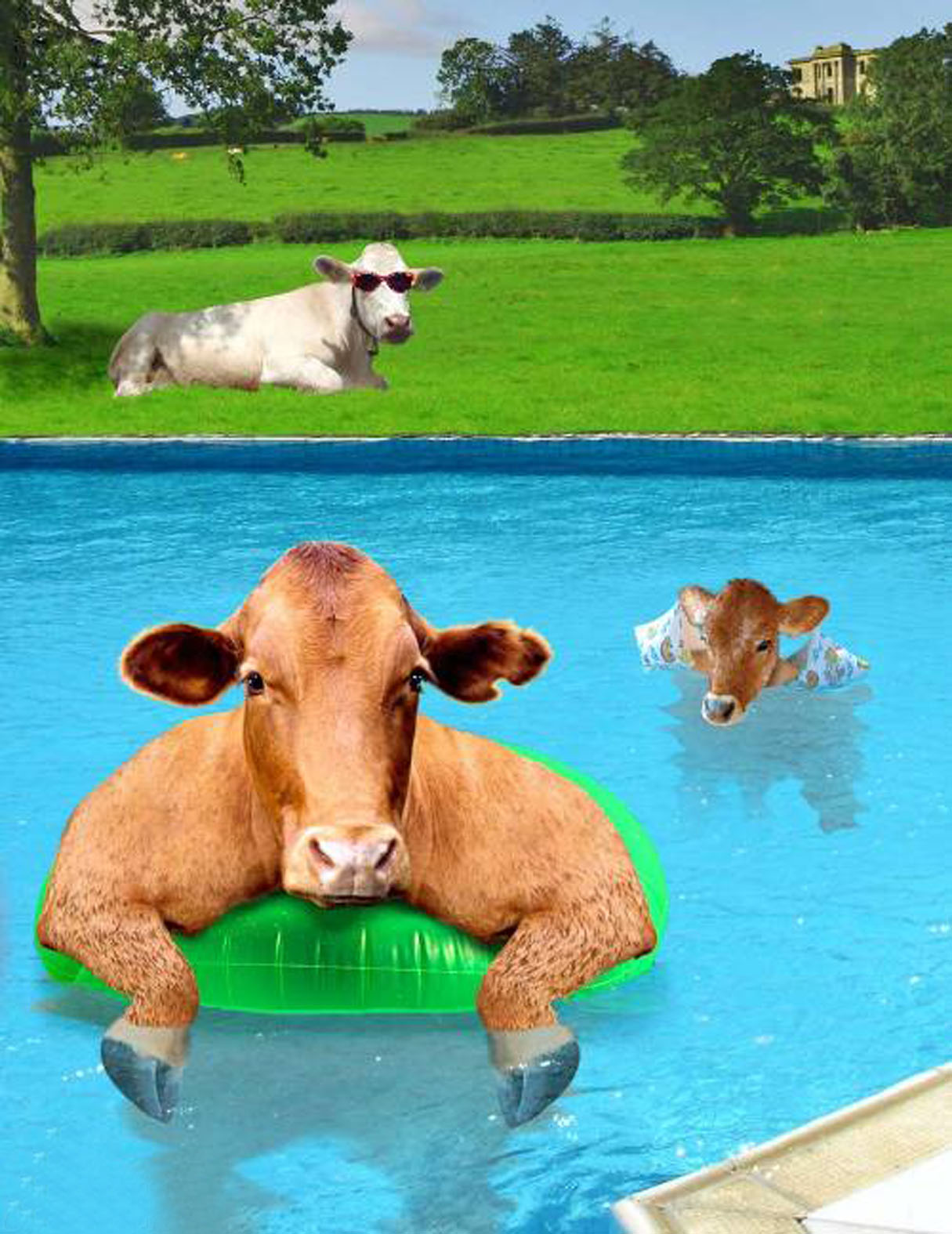 Картинки с приколами про корову