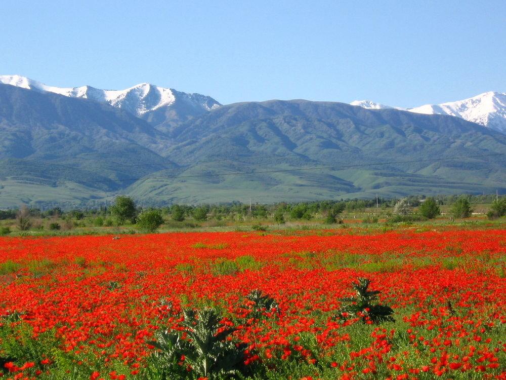 они столь казахстан фото цветущие поля казахстана заявления, фотографии фильмы