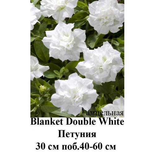 White double