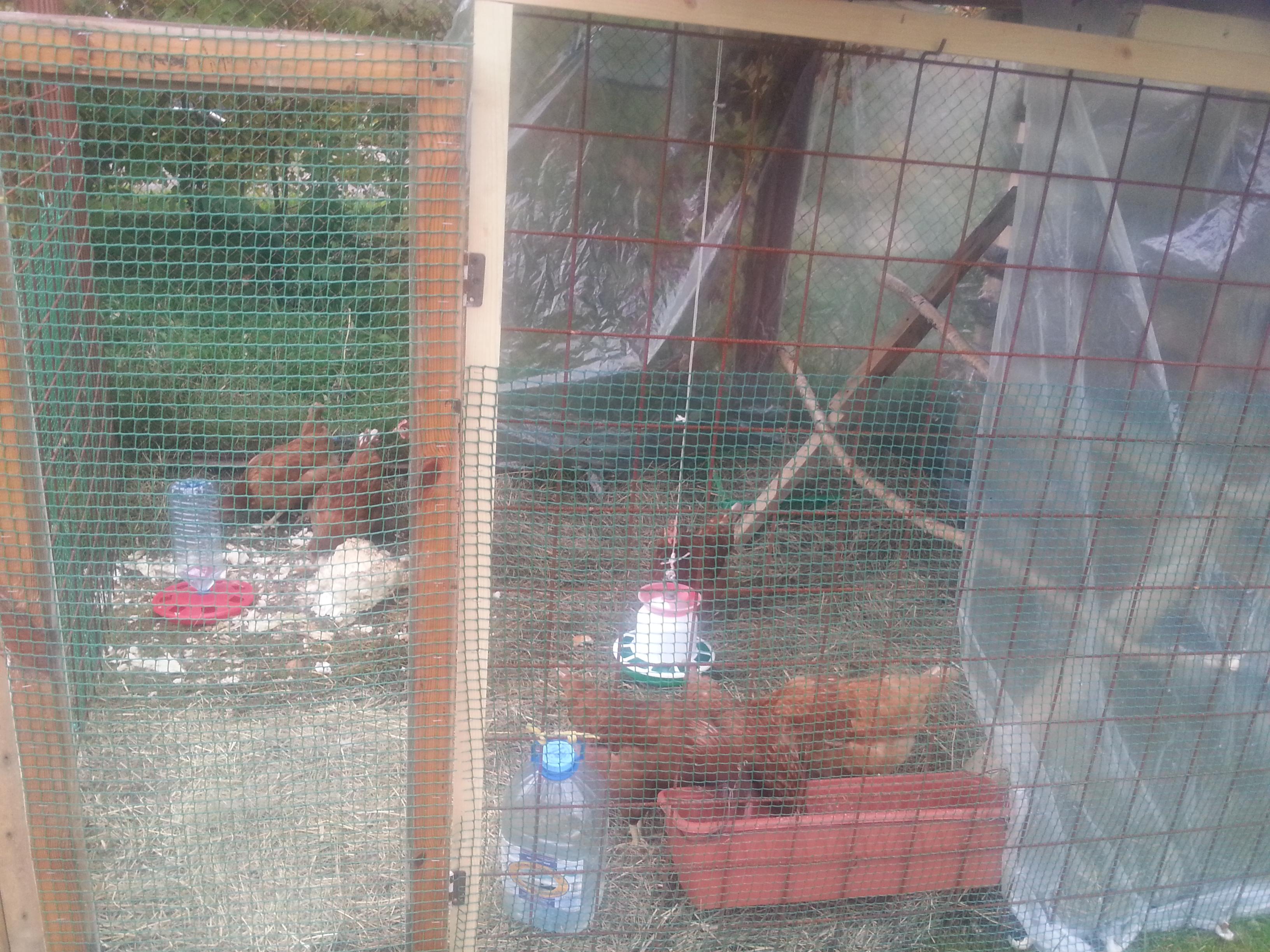 Выгул для цыплят своими руками фото 81