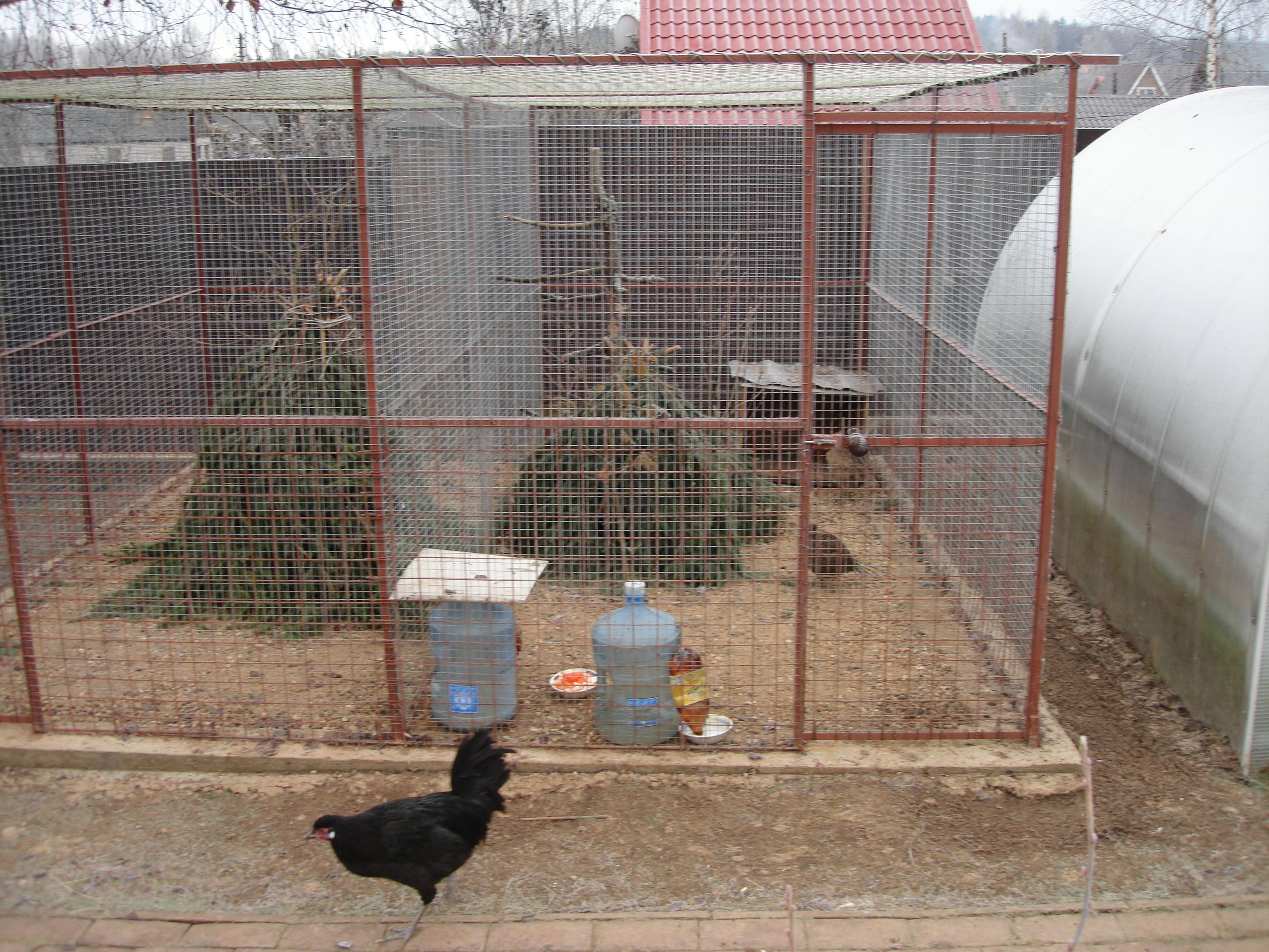 клетка для фазанов своими руками фото произошла таиланда