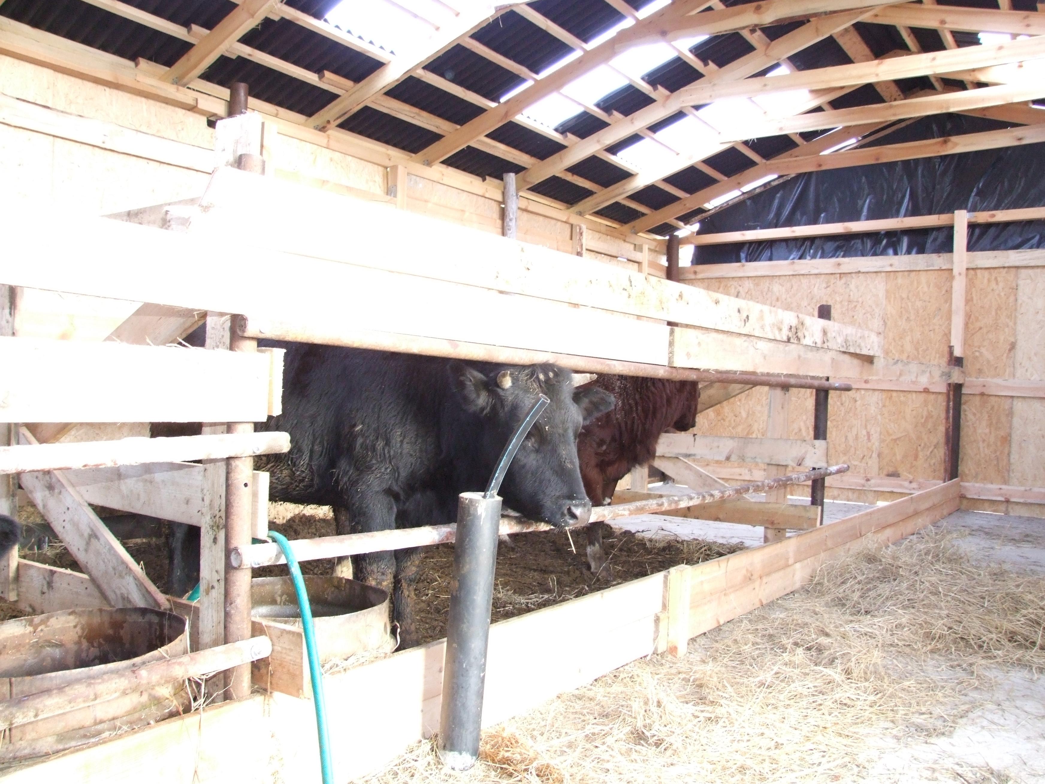 Кормушка для быка своими руками фото 759