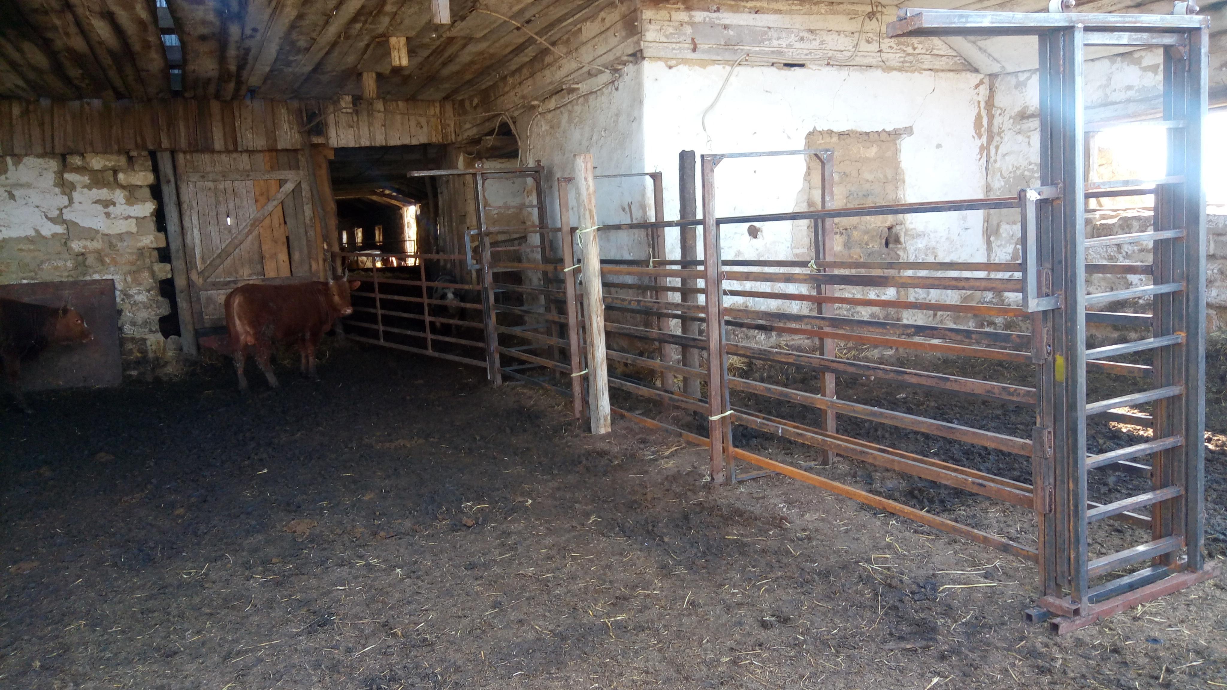 загон для откорма бычков фото настоящее