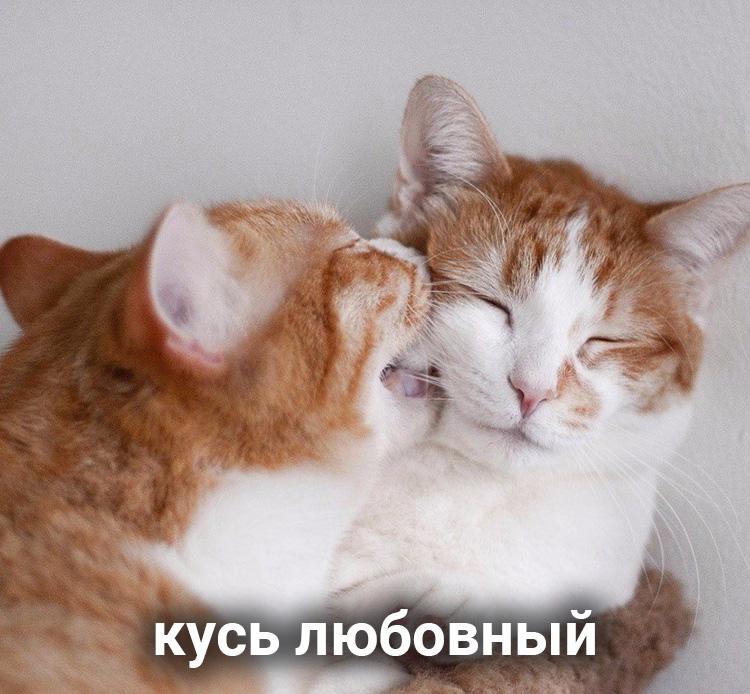 file614437.jpg