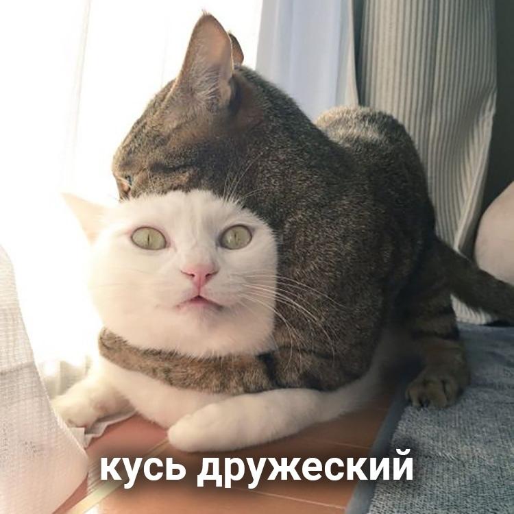 file614438.jpg