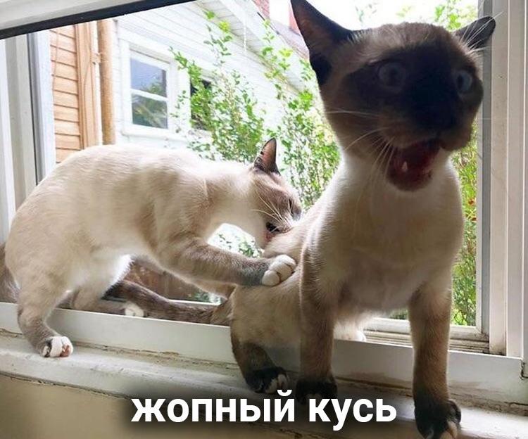 file614442.jpg