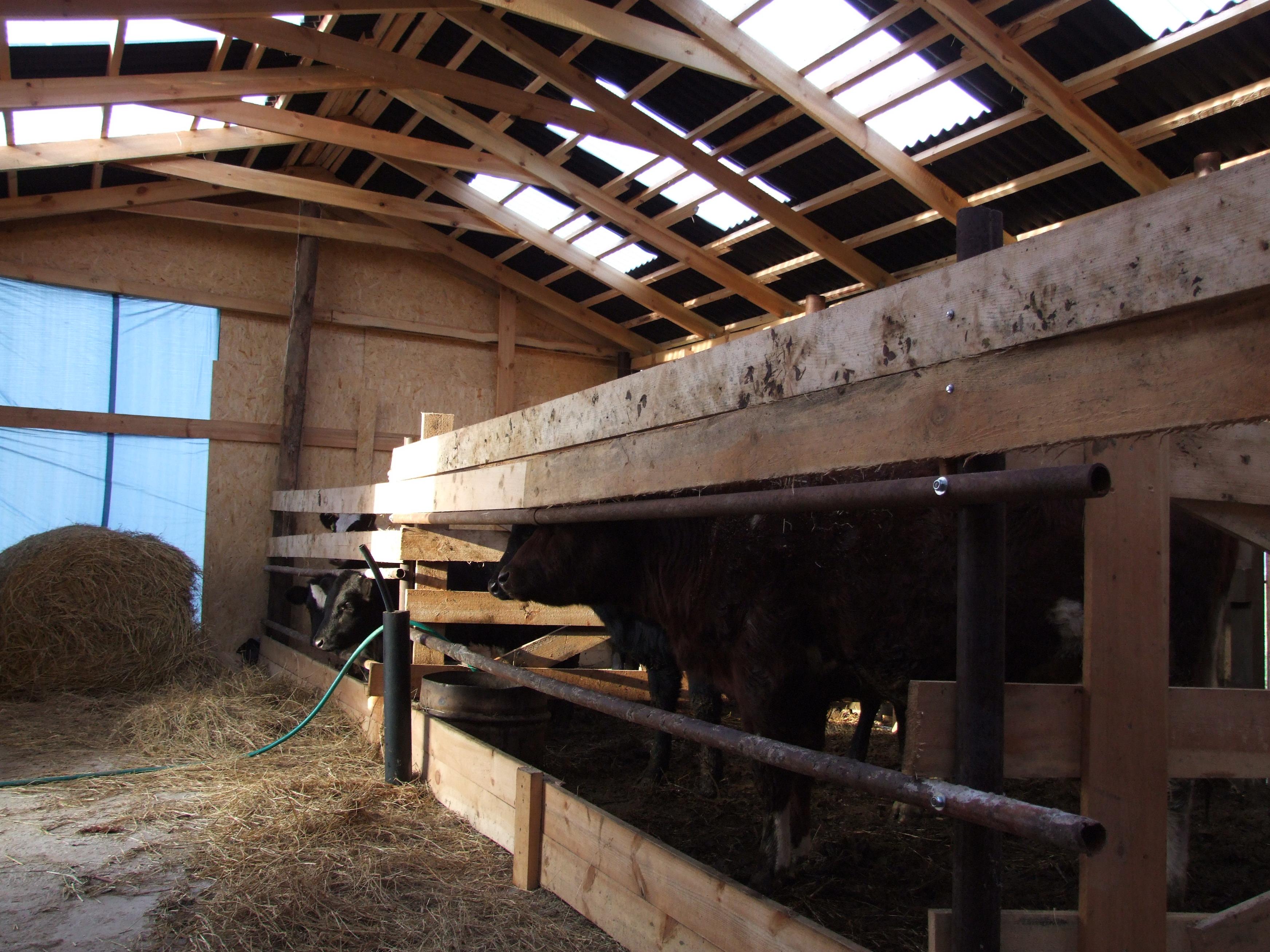 Как построить сарай для скотины своими руками видео