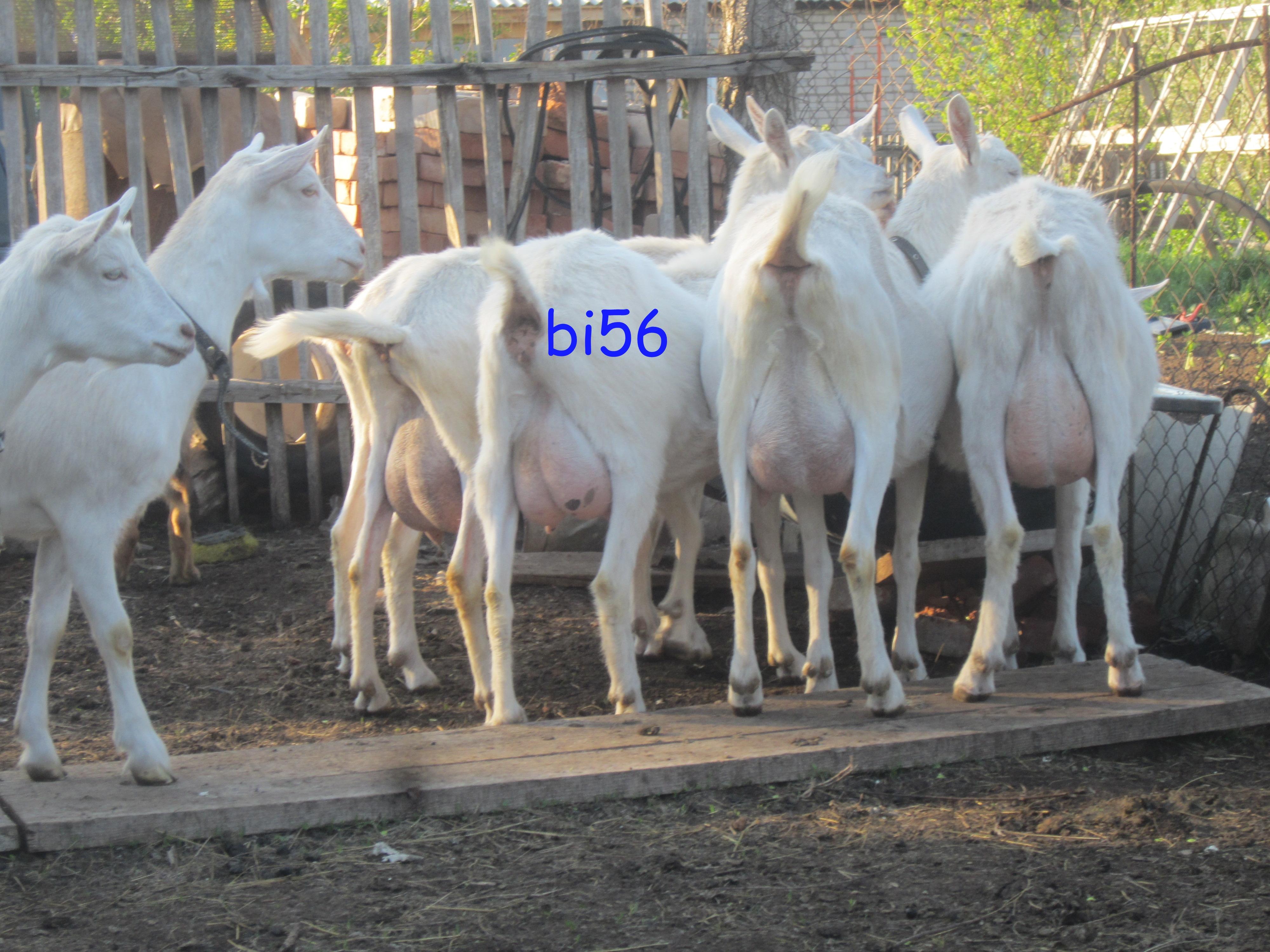 img5483.jpg